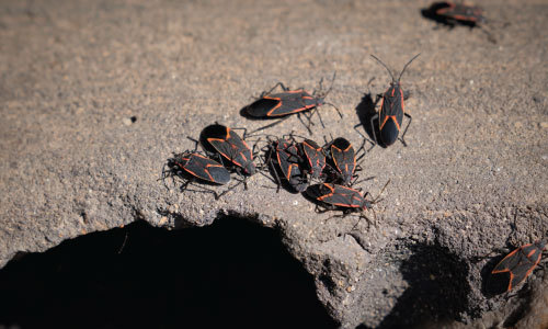 Bugs near home due to lack of pest control and Utah lawn services