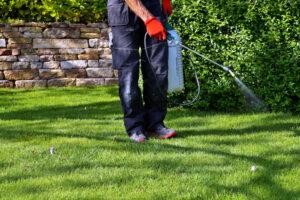 Utah Landscaper spraying pesticide with portable sprayer to eradicate garden weeds