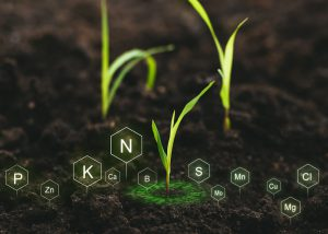 Role of nutrients in plant life for development.