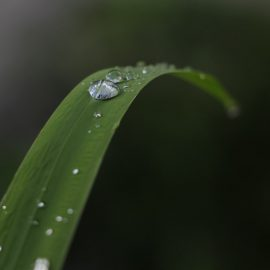 Blade of grass with droplets of water atop