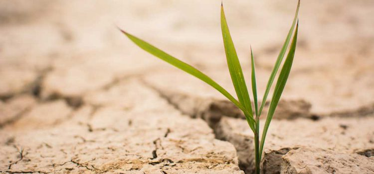 plant sprouting up from dry, cracked ground