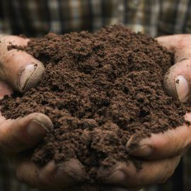 Man with a handful of quality soil