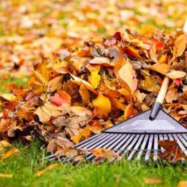 Raking up leaves during autumn